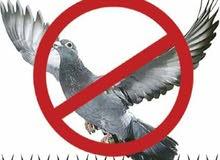النظام الآمن لإبعاد الطيور