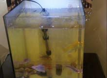 حوض سمك للبيع شبه جديد