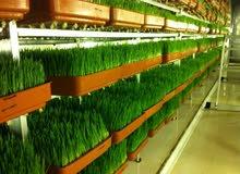 غرف استنبات الشعير الاخضر ( الزراعة المائية )