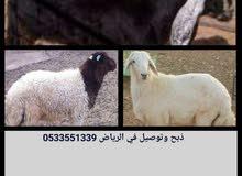 ذبح وتوصيل في الرياض