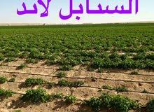 السنابل لاند (مزارع للبيع بوادى النطرون )