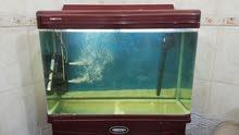 حوض اسماك الزينة حجم كبير