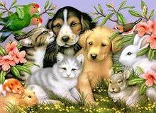 بيع أغذية قطط وكلاب وطيور