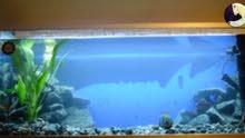 مطلوب حوض سمك في السليمانيه بسعر منااسب