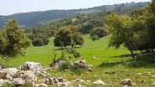 أراضي زراعية مميزة على مرتفعات عجلون بمساحة 2.5 دنم