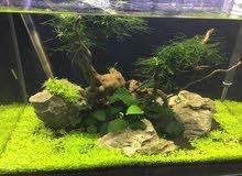 حوض سمك طبيعي