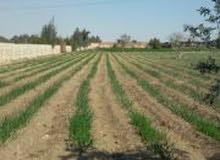 فرصه امتلك قطعه ارض 50 فدان بكان مميز لراغبي استثمار الزراعي
