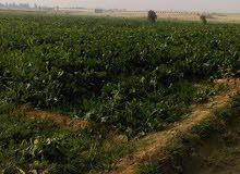 قطعة ارض للبيع مساحتها11فدان اراضي  مستصلحة بالكامل