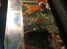 حوض سمك نظييف