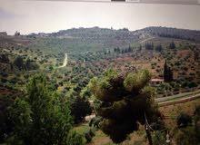 مزرعة في نادره ذو اطلالة جميلة 4.700 دونم مع بيت 80 متر، السعر 55.000 من المالك مباشره