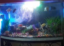 حوض سمك مع ستاند حديد