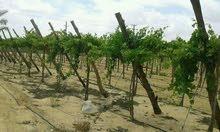 لراغبي الاستثمار الزراعي والإنتاج الحيواني مزرعة للبيع علي طريق مباشر
