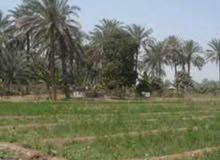 أرض مساحة 5 دونم بغداد الرضوانية