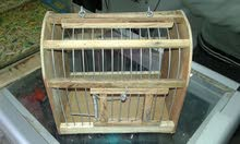 جميع نقلات طيور خشب زان بسعر الجمله