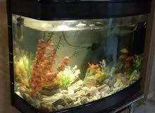 حوض سمك اكبر مقاس