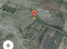 للبيع ارض 4 دونمات في مليح من اراضي مادبا تصلح مزرعه