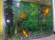 حوض سمك للبيع نضيف مع سمك