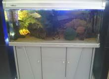 حوض سمك (اكواريوم) مع طاوله خاصه وكامل اكسسواراته للبيع