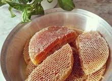 عسل الخير اجود انواع العسل الحضرمي