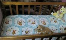 سرير اطفال خشب زان اصلى + مرتبة هاى تاكى الاصلى بحاله ممتازه