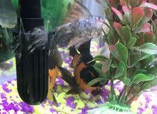 حوض اسماك مع الاسماك للبيع