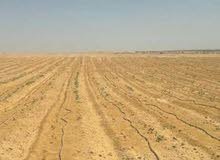 أرض  10000  فدان  للبيع  فى وادى النطرون