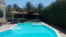 فيلا بحمام سباحة خاص - الغردقة- Villa with Praivte sweamming pool and big garden