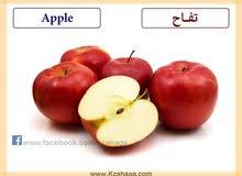 معلمة لغة انجليزية مصرية