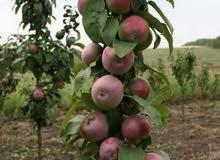 استثمر أنتج اربح لراغبي الاستثمار الزراعي