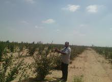 اشترة مزرعه 20 فدان بالنوباريه الجديده