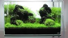 حوض نباتي طبيعي
