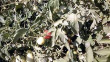 أرض زراعية للبيع بمصر(2)