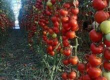 مزرعه للبيع بطريق مصر اسيوط الغربى استثمار زراعى