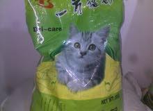 رمل قطط كربونى صينى