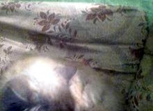 قطه جميلة مطلوب ملبغ 400 جنية