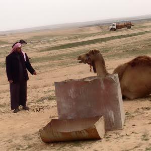 ابو محمد الزبن