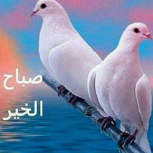 ahaed الخباز