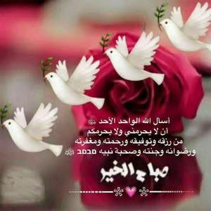 محمد الحجايا