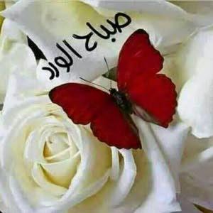 سلطان احمد رزق