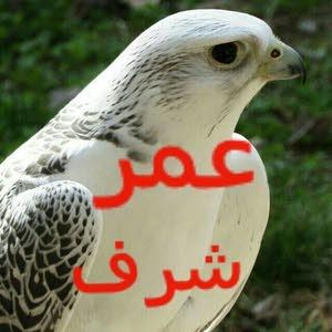 عمر شرف الاهدل