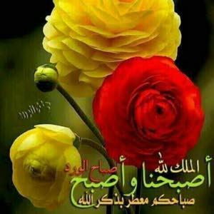 ابو علاء محمد